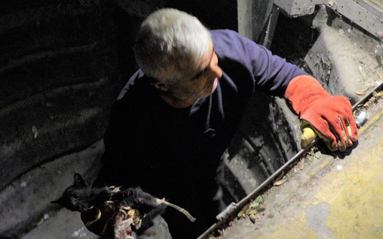 Bursa Gemlik'te çöpten kedi kurtarma operasyonu