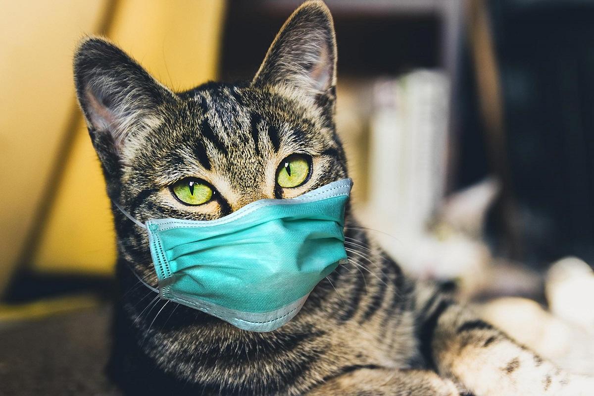 İngiltere'de gizemli kedi hastalığı